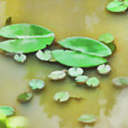 Green Lotus Leaf In The Lake Poster