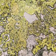 Green Moss On Rock Pattern Poster