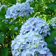 Green Nature Landscape Art Prints Blue Hydrangeas Flowers Poster