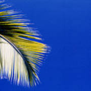 Green Palms Blue Sky  Poster