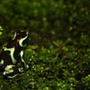 Green Poison Dart Frog Poster