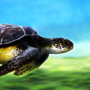 Green Sea Turtle 2 Poster