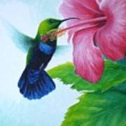 Green-throated Carib And Pink Hibiscus Poster