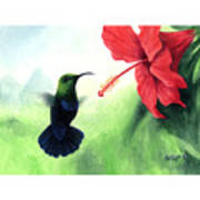 Green-throated Carib Hummingbird And Red Hibiscus Poster