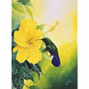 Green-throated Carib Hummingbird And Yellow Hibiscus Poster
