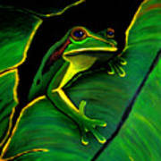 Green Tree Frog And Leaf Poster