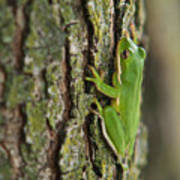 Green Tree Frog Thinking Poster