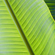 Green Tropical Leaves Poster