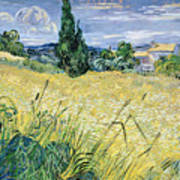 Green Wheatfield With Cypress Poster