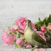 Green Woodpecker Stilllife Poster