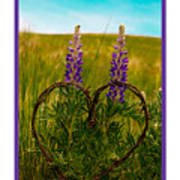 Greeting Card - Lupine Love Poster