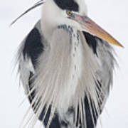 Grey Heron In The Snow Poster
