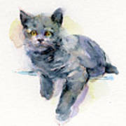 Grey Kitten Poster