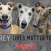 Grey Lives Matter Too Adopt Poster