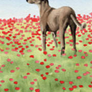 Greyhound In Poppies Poster