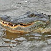 Grinning Gator Poster