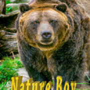 Grizzly Bear Nature Boy    Poster