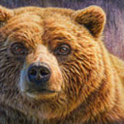 Grizzly Portrait Poster