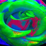 Groovin Rose Poster