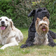 Group Of Three Dogs Poster