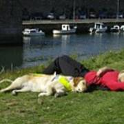 Guide Dog Relaxing Poster