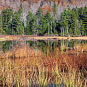 Guinea Pond - Sandwich New Hampshire Usa Poster