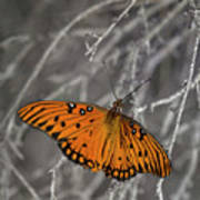 Gulf Fritillary Butterfly In The Brambles Poster