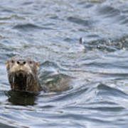 Gulf Islands Otter Poster