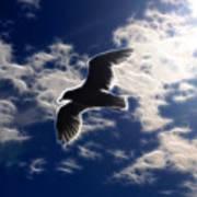 Gull Against Sky Fractal Poster