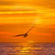 Gull At Sunrise Poster