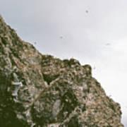 Gull Island Poster