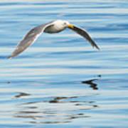 Gull Mirrored Poster