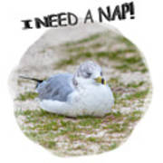 Gull Nap Time Poster