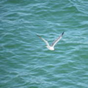 Gull Over The Gulf Poster