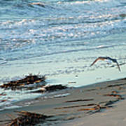 Gull Over Tybee Island Beach Poster