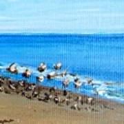 Gulls At Play Poster