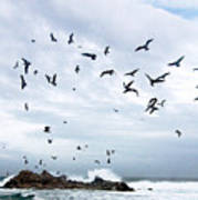 Gulls Of Carmel Poster