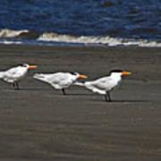 Gulls On Beach Poster