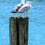 Gulls On Piling Poster
