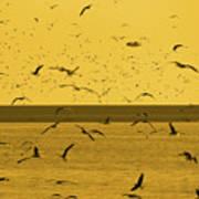 Gulls Orange Tint Poster