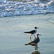Gulls Strolling Tybee Island Beach Poster
