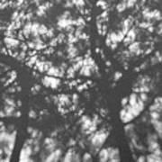 Gunmetal Grey Shadows -  Poster
