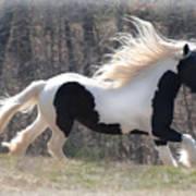 Gypsy Stallion Esperanzo Poster by Terry Kirkland Cook