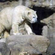 Habitat - Memphis Zoo Poster