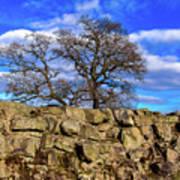 Hadrians Tree Poster