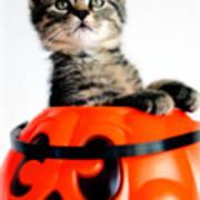 Halloween Kitten Poster