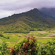 Hanalei Valley Panorama Poster