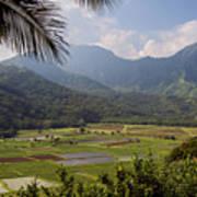 Hanalei Valley Taro Fields - Kauai Poster