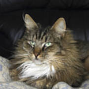Handsome Cat Poster