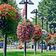 Hanging Flower Baskets In A Park Poster